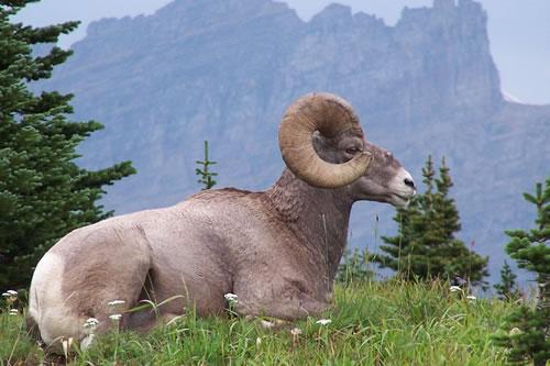 Bigfork Bay Flathead Valley Montana, Virtual Montana